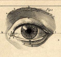 Illustration art Black and White eye artwork paper ink Anatomy all seeing eye eyeball Figures window into the soul Gravure Illustration, Engraving Illustration, Art Et Illustration, Eyes Artwork, Scratchboard, Art Graphique, Dark Art, Oeuvre D'art, Art Inspo