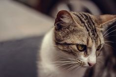 10 photos of whisker cats