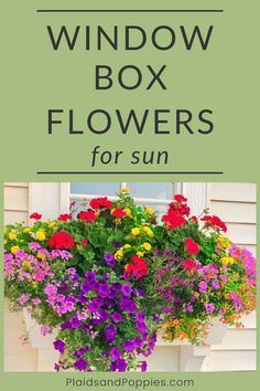 house flower boxes 170855379601409170 - You'll find Window Box Flowers for sun with this detailed gardening tutorial. Learn how to choose the best sun-loving flowers with great color combo ideas for your window boxes. Source by plaidsandpoppies Hanging Window Boxes, Winter Window Boxes, Window Box Plants, Window Box Flowers, Shade Flowers, Window Planter Boxes, Flowers For Sun, Railing Flower Boxes, Balcony Flower Box