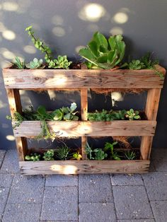 DIY vertical pallet garden. Perfect home for my beloved succulents!