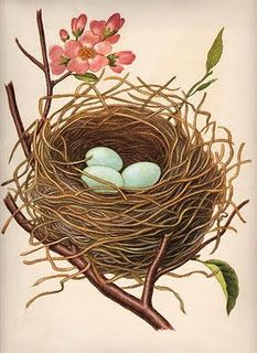 Vintage Nest w/Robin's Eggs - The Graphics Fairy - Click above to enlarge This is a gorgeous vintage clip art image of a nest with perfect blue Robin's eggs! Vintage Clip Art, Images Vintage, Vintage Pictures, Vintage Ephemera, Graphics Fairy, Decoupage, Bird Illustration, Illustrations, Cupcake Tutorial