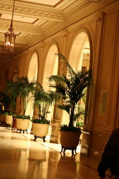 potted palms in lobby