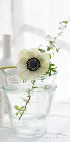 Daffodils, Pansies, Tulips, Solomons Seal, White Anemone, String Of Pearls, Green Nature, Orchids, Glass Vase