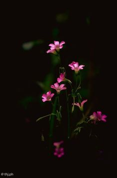 Photo by Thi Pham Beautiful Flowers Images, Beautiful Flowers Wallpapers, Beautiful Nature Wallpaper, Pretty Wallpapers, Flower Images, Flower Pictures, Nature Pictures, Wallpaper Nature Flowers, Flower Iphone Wallpaper