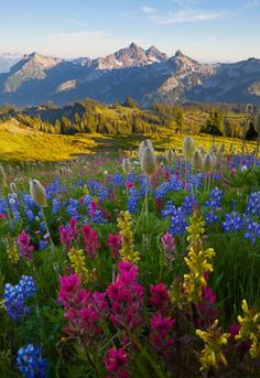 .. Misty Valley, v blízkosti Mount Ranier štáte Washington .