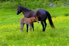 hester-Startsidensøk-Bilder Horses, Animals, Pictures, Animales, Animaux, Horse, Words, Animal, Animais