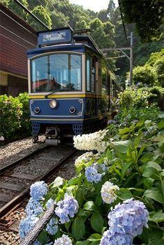 Enoden (Enoshima Electric Railways) and hydrangea in Kamakura, Japan 江ノ電 もっと見る Kamakura, By Train, Train Tracks, Yokohama, Kyoto, Trains, Japan Train, All About Japan, Japan Art
