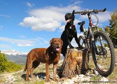 My favorite thing. Mens Mountain Bike, Mountain Bike Trails, Biking With Dog, Mtb Trails, Skate Park, Bike Life, Dogs And Puppies, Labrador Retriever, Bicycling