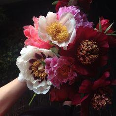 I love big, fluffy flowers