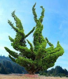 Philip Rickwood - Google+  - Wow amazing tree