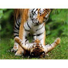 Dad get off me!!