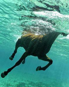 #Repost with @wildgeography  Underwater horse |Photography by Kurt Arrigo #Wildgeography
