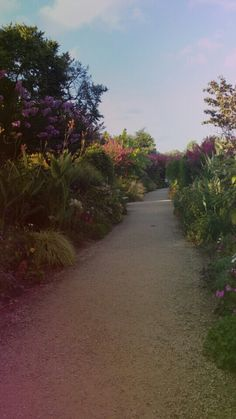 Mimizan - lac - promenade fleurie - romantique