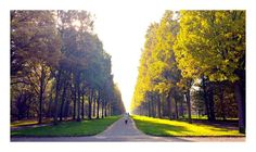 The Path of Trees  Kassel-Germany