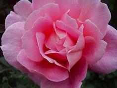 DSCN1175   Flickr - Photo Sharing!