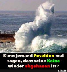 Kann jemand Poseidon mal sagen, das seine Katze..