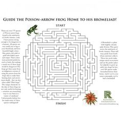 Rainforest Games and Worksheet Activities | The Rainforest Foundation