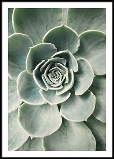 Cactus flower, poster in the group Posters & Prints / Botanical at Desenio AB (8599)