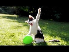 Funny Cat Jokes, Funny Cats And Dogs, Funny Animal Videos, Funny Animals, Cute Animals, Hilarious, Cute Kitten Gif, Kittens Cutest, Funny Cat Wallpaper