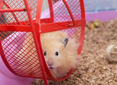 Create Space: Get Off the Hamster Wheel of Life Teddy Hamster, Hamster Care, Inspirational Short Stories, Hamster Wheel, Wheel Of Life, Volunteer Work, Makes You Beautiful, Create Space, Care About You