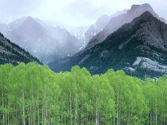 Mountain Mist Alberta Canada Wallpaper