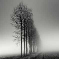 Aligned  By Pierre Pellegrini  Submitted 1/4/2012 in the Landscape category and viewed 143,726 times.  P20+•1/2sec•ISO-100