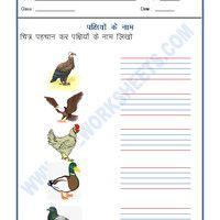 320 Best Free Hindi Grammar worksheets/Hindi Worksheets
