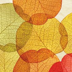 'Pressed Leaves' beverage napkin from PPD. Thanksgiving & Fall decor.
