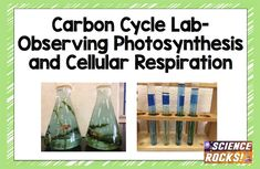 Carbon cycle lab: Observing photosynthesis and cellular respiration Plant Science, Science Biology, Teaching Biology, Science Lessons, Earth Science, Life Science, Teaching Tools, Teaching Ideas, Ag Science