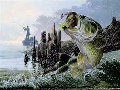 Wild Animal Fish In The Ocean Mahi Mahi