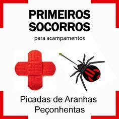 Primeiros Socorros para Picadas de Aranhas Peçonhentas   FuiAcampar