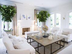 White sofa, white walls, fiddle fig tree