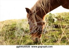 """Brown Horse""- Horse Stock Photo from Gograph.com Horse Horse, Brown Horse, Horses, Horse Photos, Art Images, Clip Art, Stock Photos, Illustration, Pictures"