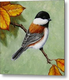 Painting - Chickadee - Autumn Charm by Crista Forest , Bird Drawings, Animal Drawings, Diamond Drawing, Motifs Animal, Cross Paintings, Bird Paintings, Bird Pictures, China Painting, Watercolor Bird
