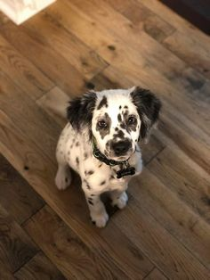 Wonderful No Cost dogs and puppies dalmatian Tips Do you love your dog? Suitable canine health care and also training will gu Cute Baby Animals, Animals And Pets, Funny Animals, Nature Animals, Cute Puppies, Cute Dogs, Dogs And Puppies, Doggies, Funny Dogs