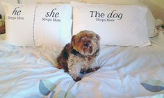 I don't see anything wrong with this set-up - do you??  :)  <3 (Dog SnorZ Pillowcases)
