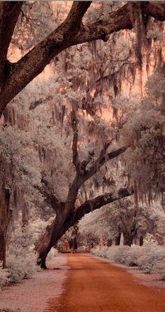 Peaceful path ~ Savannah, Georgia...oh the beach, & ghost stories, & river street.
