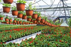 Growing vegetables in a hothouse or greenhouse is not quite the same as growing them in a regular garden setting for a variety of reasons.