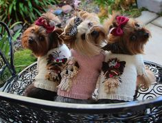 via Owned by Yorkies