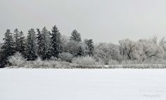 Wascana Lake, Regina, SK Xmas Decorations, Diy, Photography, Outdoor, Christmas Room Decorations, Outdoors, Bricolage, Outdoor Games, Photograph