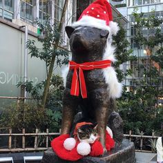 They are often together .. Hachi and the cat ... Merry Xmas from Japan