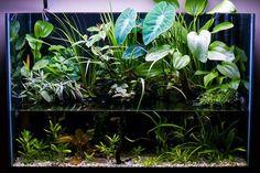 Build a Planted Riparium!