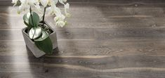 A truly stunning Highland Oak floor by Boen. Each plank has been brushed and white-oiled to give it a distressed and aged effect. Wooden Flooring, Hardwood Floors, Oak Flooring, Garden Pavilion, Grey Oak, Real Wood, Hallways, Solid Oak, Plank