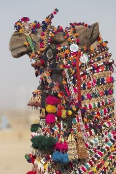 Decorated Camel At The Desert Festival In Jaisalmer, Rajasthan,.. Royalty Free Stock Photo, Pictures, Images And Stock Photography. Image 4345529.