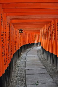 Torii ( traditional Japanese gate ) Fushimi Inari-taisha, Kyoto