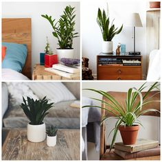 How to Keep Your Houseplants Alive  - ELLEDecor.com