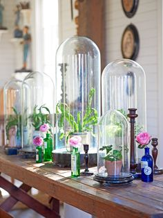 """Sheryl's love for glass cloches began when she visited Antiques on Holiday in Destin, Florida. """"They had a table filled with them, and that's where I got quite a few. They look so beautiful, and you can put anything in there."""""""