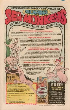 Sea Monkeys-Intriguing until you got them and found out they were only the tiniest shrimp you had ever seen! Comic book wonder! Vintage Comic Books, Vintage Comics, Vintage Advertisements, Vintage Ads, Retro Ads, Sea Monkeys, I Remember When, Old Ads, Good Ole