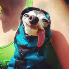 Zappa il #cane che assomiglia a #Sid dell'#EraGlaciale #iceage