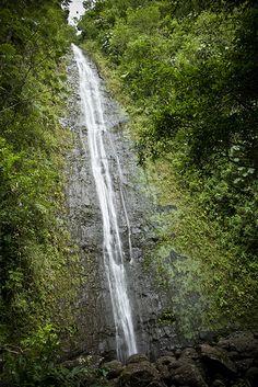 Manoa Falls Trail: An Oahu Green Gem